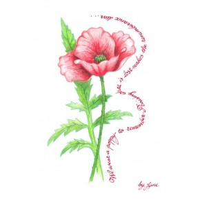 Remembrance Poppy