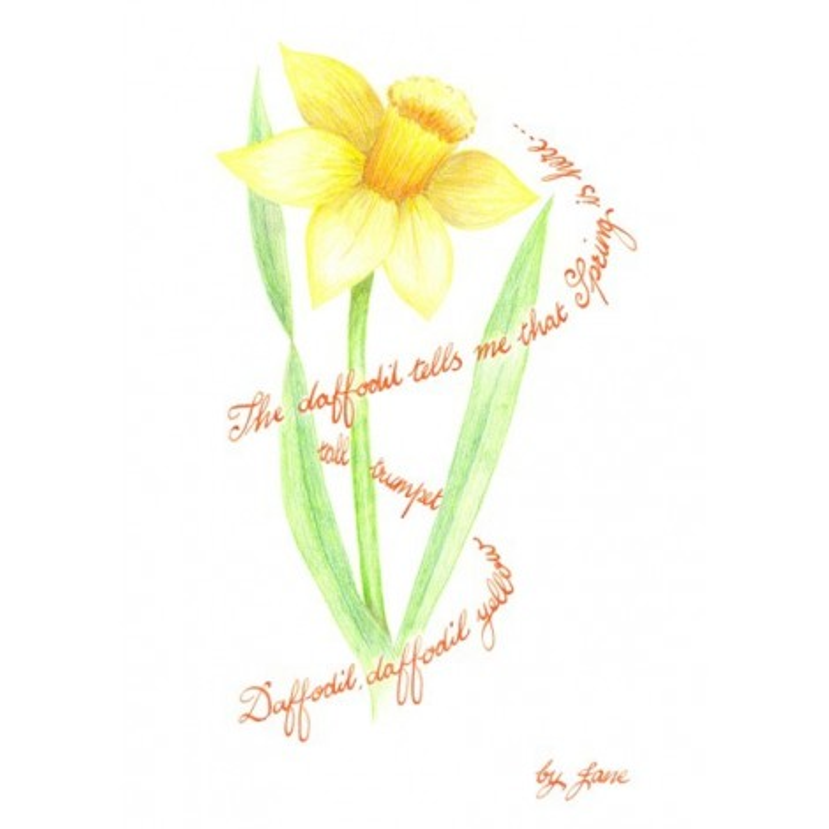 Kevään narsissia