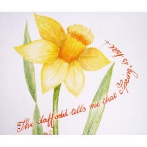 Voorjaar narcis