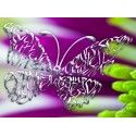 Cromo Mariposa en una flor púrpura