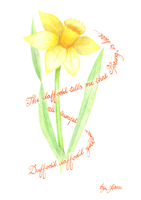Spring Daffodil - calligraphic greeting card
