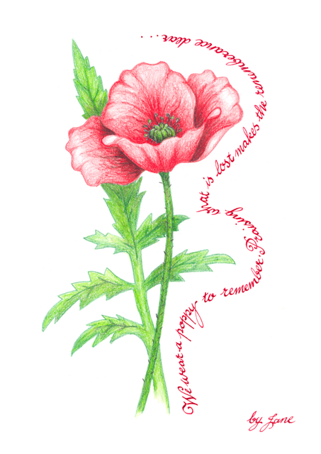 Remembrance Poppy - calligraphic greeting card